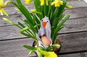 Vojta: The Easter Chick Is Sitting In Daffodils :-)